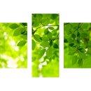Wandbilder Natur Grün 90x70 Glas 3 Teilig Acryl Bild...