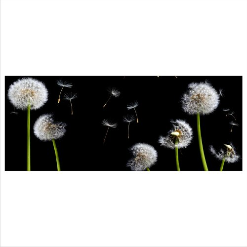 Glasbild 125x50 XL Pusteblume Schwarz Weiß Panorama Wandbild Glasbilder Deko