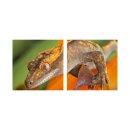 Reptile 50x50cm 2 Glasbilder Glasbild Echtglas Wandbild Deko