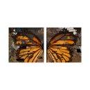 Schmetterling 50x50cm 2 Glasbilder Glasbild Echtglas...