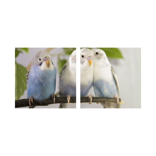 Papagei 50x50cm 2 Glasbilder Glasbild Echtglas Wandbild Deko