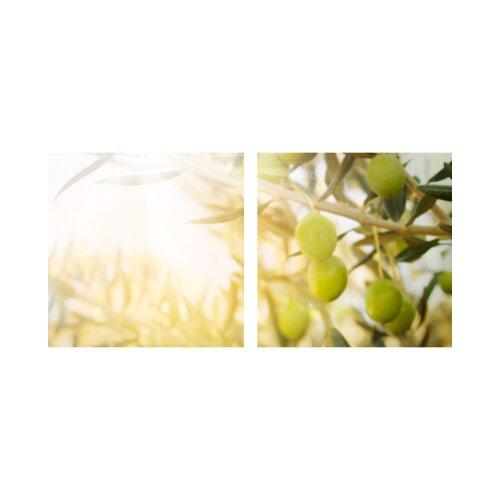 Oliven 50x50cm 2 Glasbilder Glasbild Echtglas Wandbild Deko
