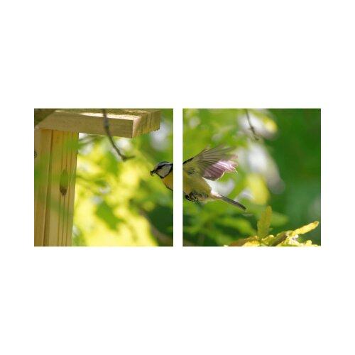 Vogel 50x50cm 2 Glasbilder Glasbild Echtglas Wandbild Deko