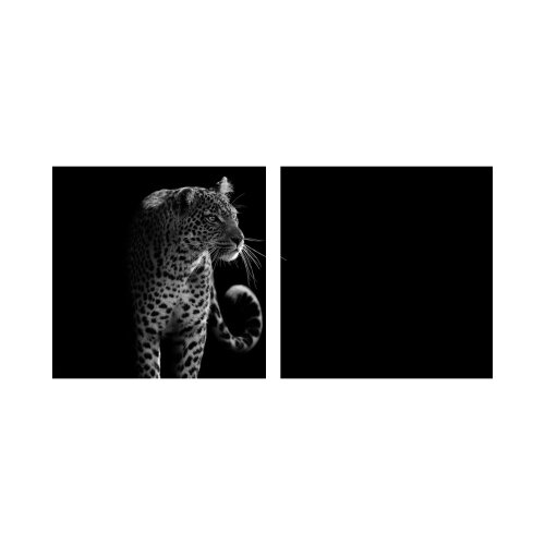 Gepard 50x50cm 2 Glasbilder Glasbild Echtglas Wandbild Deko