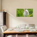Tiere 50x50cm 2 Glasbilder Glasbild Echtglas Wandbild Deko