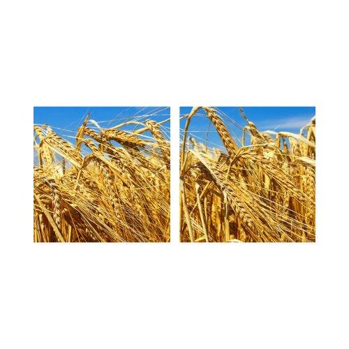 Getreide 50x50cm 2 Glasbilder Glasbild Echtglas Wandbild Deko
