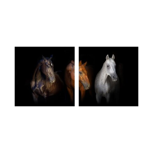 Pferde 50x50cm 2 Glasbilder Glasbild Echtglas Wandbild Deko