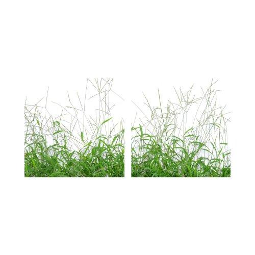 Pflanze 50x50cm 2 Glasbilder Glasbild Echtglas Wandbild Deko