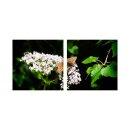Schmetterlinge 50x50cm 2 Glasbilder Glasbild Echtglas...