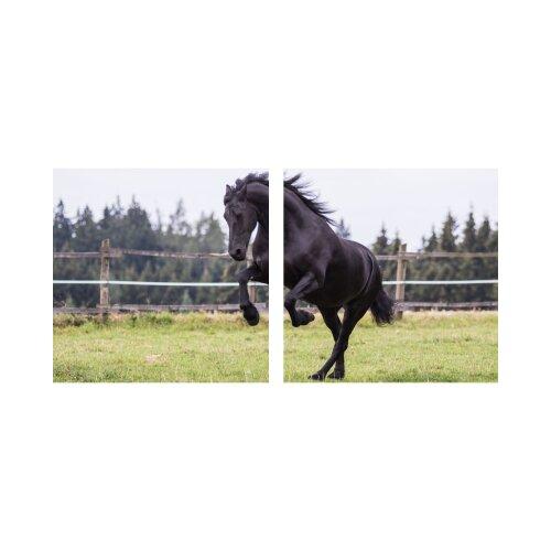 Pferd 50x50cm 2 Glasbilder Glasbild Echtglas Wandbild Deko