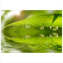 Pflanze 70x50cm Glasbilder Glasbild Echtglas Wandbild Deko
