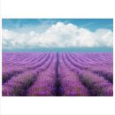 Lavendel 70x50cm Glasbilder Glasbild Echtglas Wandbild Deko