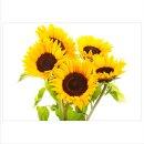 Sonnenblumei 70x50cm Glasbilder Glasbild Echtglas...